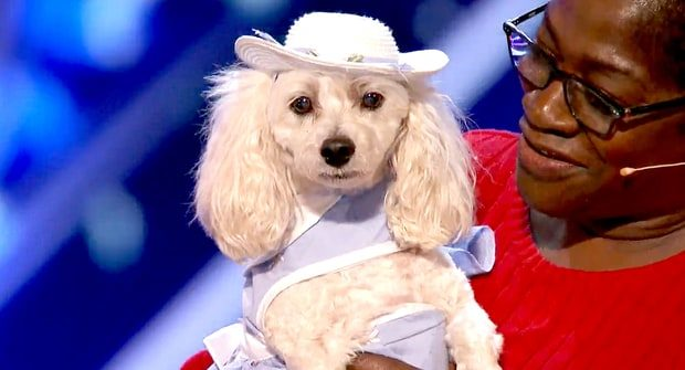mia-the-cockapoo-AGT NBC