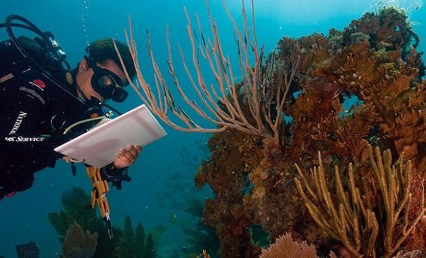 Coral_Bleaching