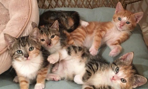 Beth Stern cats