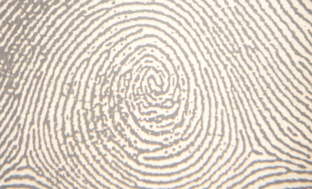 Plain_whorl_in_a_right_thumbprint