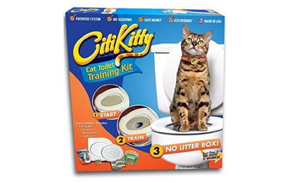 CitiKitty on Amazon BIG