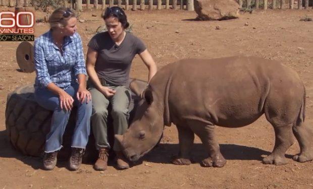 60 Minutes Rhino