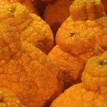 Sumo_oranges_(16428203897)